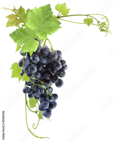 grappe de raisin rouge