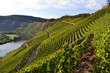 canvas print picture - Weinberge an der Mosel