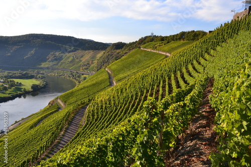 canvas print picture Weinberge an der Mosel