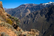 Condors at Colca Canyon