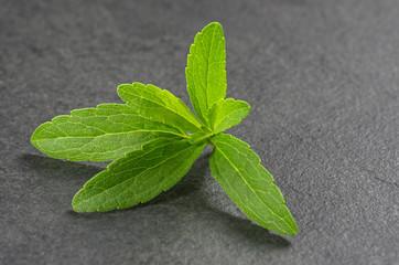 Steviablätter auf einer Schieferplatte