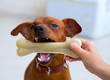 brown pinscher dog playing with bone