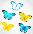 Butterfly isolated set. Vector