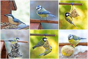 Kohlmeise, Blaumeise und Kleiber am Vogelhaus