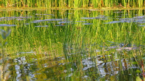 water ripple on summer pond