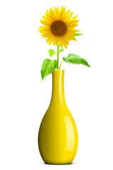 Sunflower in yellow vase isolated on white