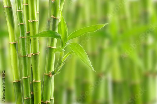 Fototapeten,hintergrund,bambus,landesgericht,botanical