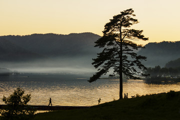 Tree silhouette on lake Teletsky