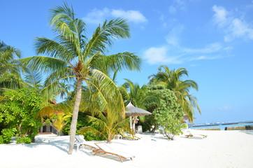 Palmen, Strand und Meer