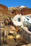 Mules waiting in Ammoudi