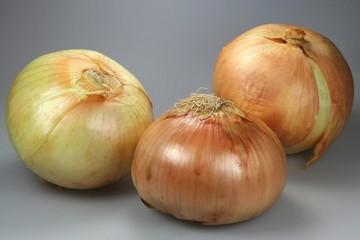 Gemüsezwiebel03
