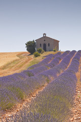 A small chapel amongst a field of lavender.