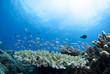 Leinwanddruck Bild - 青い海とサンゴと小魚の群れ