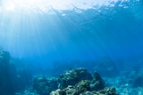 Fototapety 海底に差し込む光