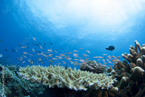 Leinwanddruck Bild 青い海とサンゴと小魚の群れ