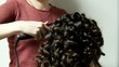 Постер, плакат: perm hair of the girl in a barbershop
