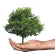 tree in a hand, isolated