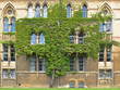Tree on wall of Christ Church college in Oxford, United Kingdom.