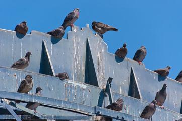 Pigeon's crap