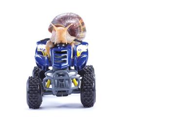 Snail riding a quad