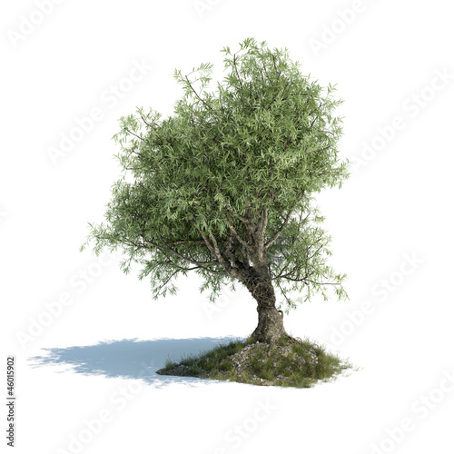 olive tree 3d illustration