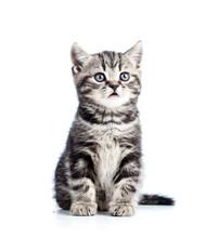 Niedliche schwarze Katze Katze isoliert auf weiß