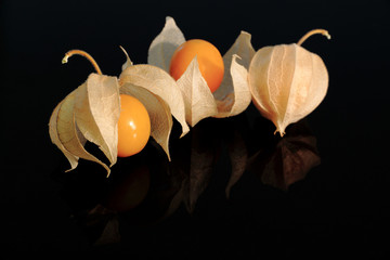 Cape Gooseberry (Physalis) on black with reflection
