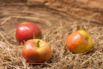 Äpfel im Heu