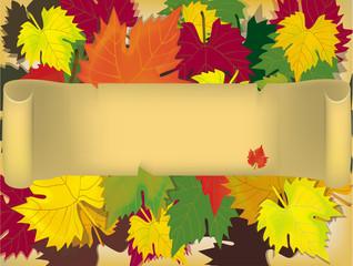 leaves, autumn.
