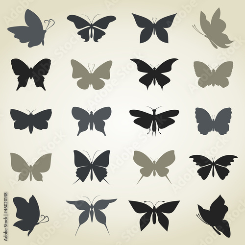 Collection the butterfly