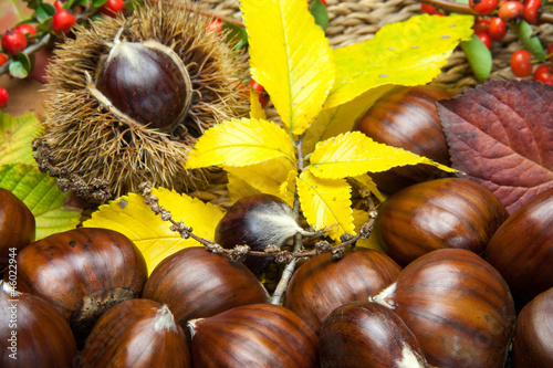 Time of chestnuts