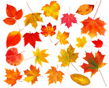 collection beautiful colourful autumn leaves isolated on white b