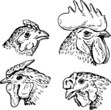 Chicken's heads
