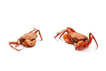 Amigos cangrejos