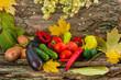 Autumn vegetables hops foliage on old bark
