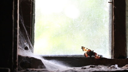 butterfly on the window of an abandoned house