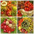 collage with autumnal images with fruits