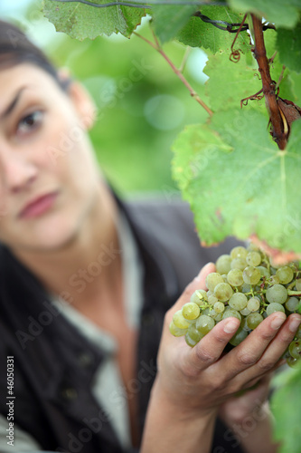 a woman picking a grape