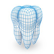 Human Tooth with Grid (Protection Concept)