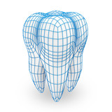 Human Tooth with Grid (Protection Concept) - 46050702