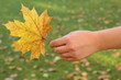 Hand holding a yellow maple leaf