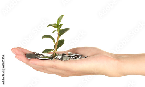 woman's hand are holding a money tree