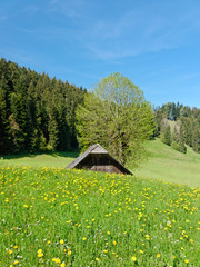 Swiss Meadow and Barn in Spring