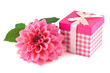 Pink gift box and a beautiful dahlia