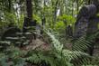 Leinwanddruck Bild - Old graves at Jewish cemetery, Okopowa Street in Warsaw, Poland
