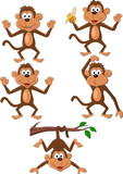 Fototapety Monkey cartoon