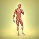 Anatomía poster