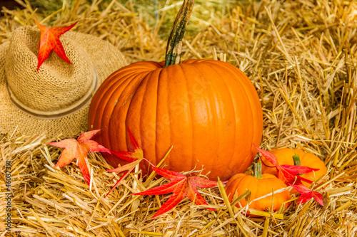 Kürbisse mit Hut im Stroh