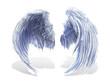 weißer Flügel 4