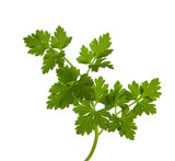 parsley  isolated on a white background.  shallow depth of field